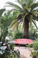 Red, curved plastic bench and palm trees in garden