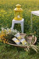 Chamomile, bags of snacks and wreath of flowers in wicker basket in front of yellow lantern on white, metal stool in field of flowering rapeseed