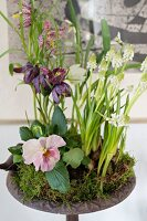 Snake's head fritillaries, white grape hyacinths and violas arranged with moss in bowl