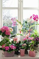 Various spring flowers in shades of pink on windowsill