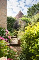 Hydrangeas in flowering garden with French manor house in background