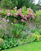 Flowering perennials in bed and pink rose climbing over garden wall