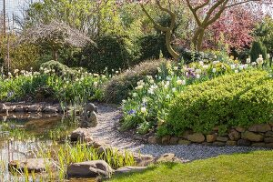 Flowering magnolia, stone wall and pond in spring garden