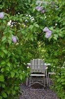 Versteckter Sitzplatz im Garten, Blick auf weisse Stühle um Tisch durch Fliederbusch
