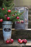 Fir branches decorated with red apples and red berries in vintage planter