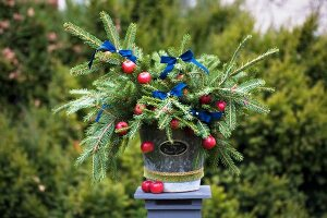 Fir branches festively decorated with apples and dark blue ribbons in vintage planter