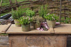Verschiedene Kräuter in Vintage Behältern auf Holzablage im Freien