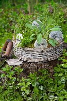 Various herbs with labels planted in basket on tree stump