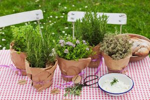 Various potted herbs wrapped in brown paper on table with gingham tablecloth outdoors