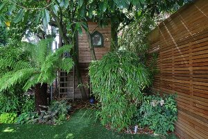 Palm tree and bamboo growing in garden with tree house