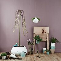 Various house plants in front of lilac wall
