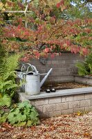 Watering cans on edge of pond in autumnal garden