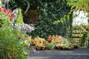 Autumn garden: potted plants in front of ivy-covered house façade