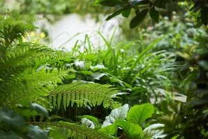 Farn und verschiedene Grünpflanzen in eingewachsenem, grünem Garten