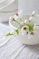 Apple blossom in white bowl