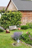 Dog lying on lawn in cottage garden adjoining old barn