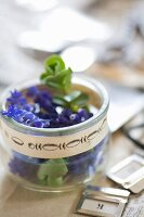 Grape hyacinths in glass jar with vintage-style border