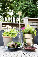 Potted flowering geraniums and succulents in dish next to bird bath on terrace table