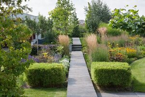 Clipped bamboo cubes, ornamental grasses and flowering perennial flanking wooden walkway leading through well-tended garden