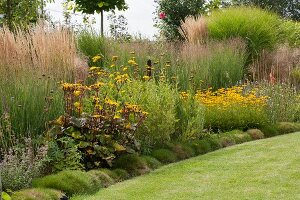 Yellow rudbeckia and ornamental grasses next to lawn in summer garden