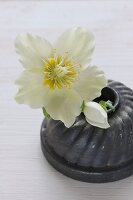 Bundt cake tin used as stand for white hellebore flower