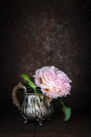 Double rose in silver milk jug