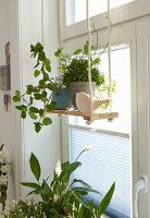A wooden swing hung up by jute ropes in front of a window decorated with green plants