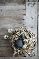 Black eggs and quail eggs in nest on weathered wood