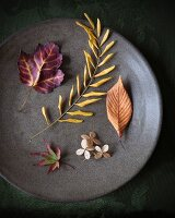 Autumn leaves and hydrangea florets on a plate