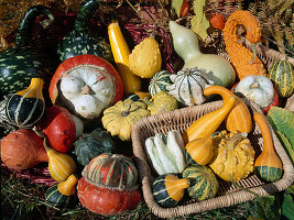 Pumpkins and Ornamental Gourds