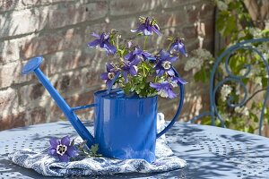 Watering can as vase with bouquet of Aquilegia