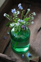 Forget-me-nots (Myosotis) in a green glass vase in a wooden tray