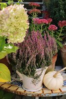Heather, sedum and ornamental squash on small garden table