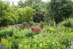 Flowering red roses in idyllic cottage garden