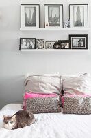 Framed pictures on narrow shelf above cat on double bed