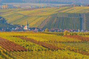 Colourful autumn vineyards (Escherndorf, Franconia, Bavaria, Germany)