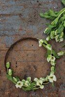 Rustikaler Kranz aus rostigem Draht und Tulpen auf abgenutztem Tisch