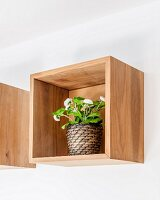 Primula in wooden box mounted on wall as shelf