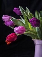 Tulips in lilac jug
