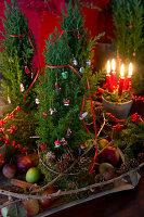 Tontopf mit Moos, vier Kerzen, Ilex und Koniferenzweige als Weihnachtsdeko