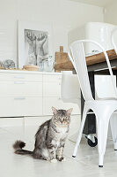 Cat sitting next to white metal chair in bright kitchen with white floor