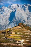 Chamoson vineyards in front of in the Swiss canton of Valais