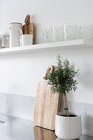 Small standard rosemary in white pot below white kitchen shelf