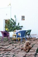 Small dog on cobbles in front of wicker armchairs and cactus against house façade