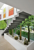 Bed of cacti under self-supporting staircase against glass wall