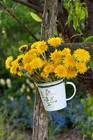 Small bouquet of taraxacum (dandelion) hung in cups