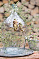 Sprigs of juniper and cones arranged around a demijohn