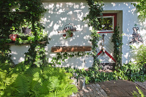 Ivy growing on wall of rustic house in dappled shade