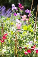 Blumenwiese im Garten