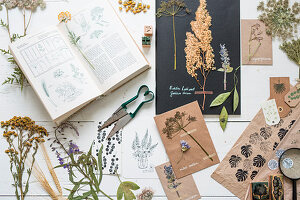 Pressed plants and flowers, botanical book and printing blocks